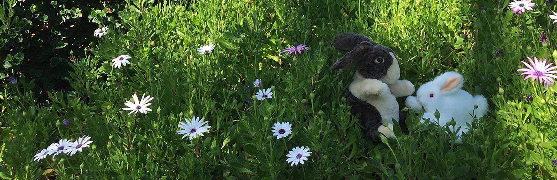 spring_bunnies_banner.jpg