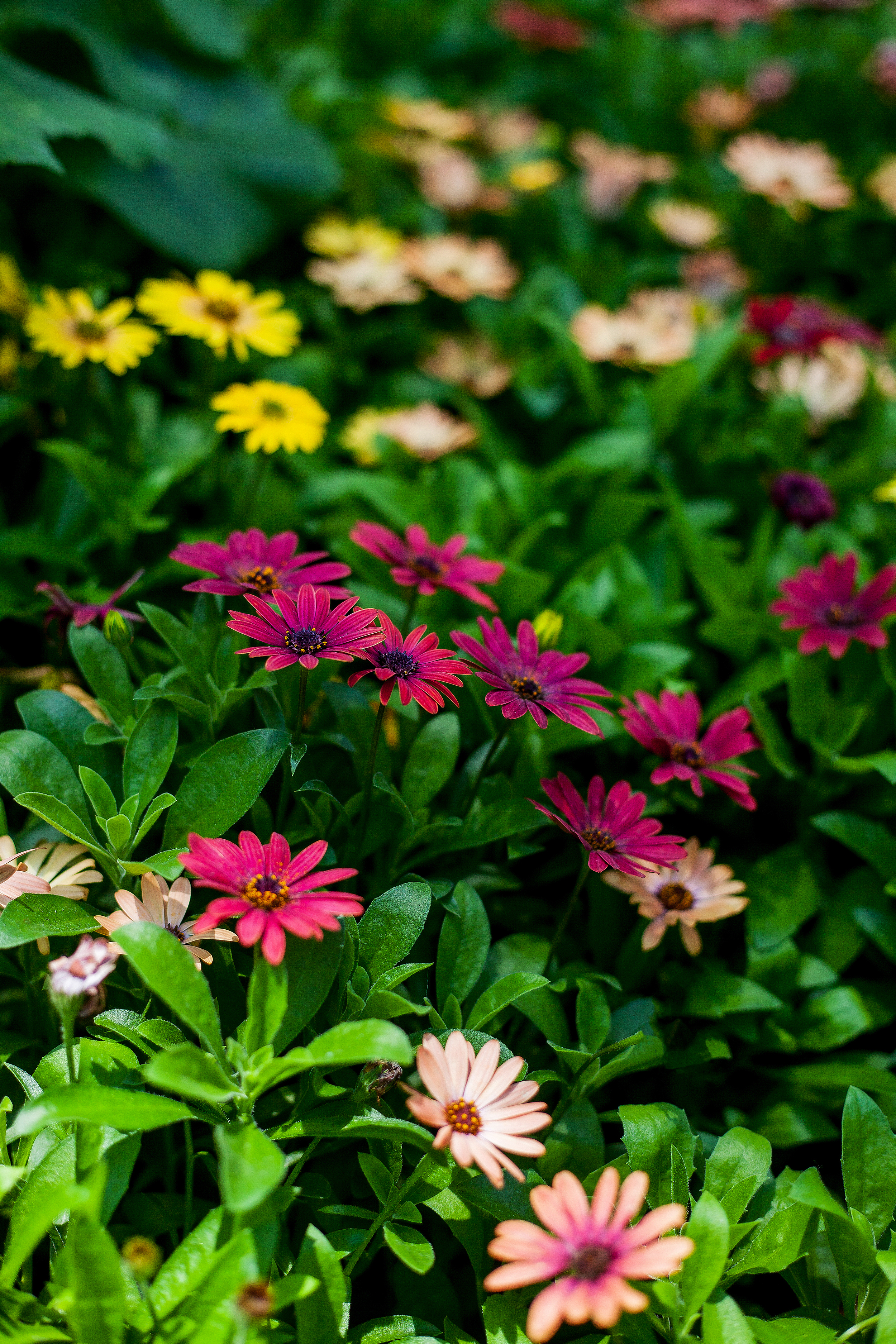 Singapore-Gardens-By-The-Bay-Flower-Dome