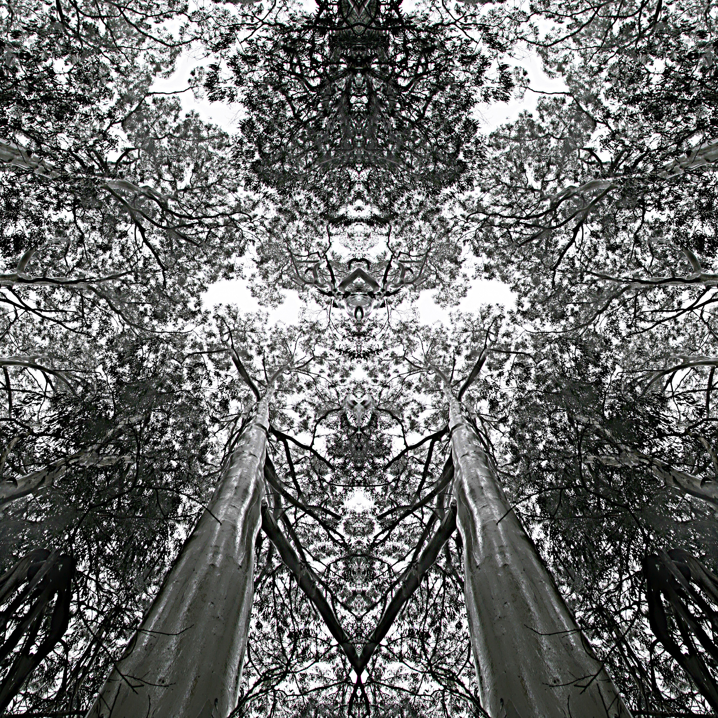 Dichotomy - Bamboo Gum - WU08
