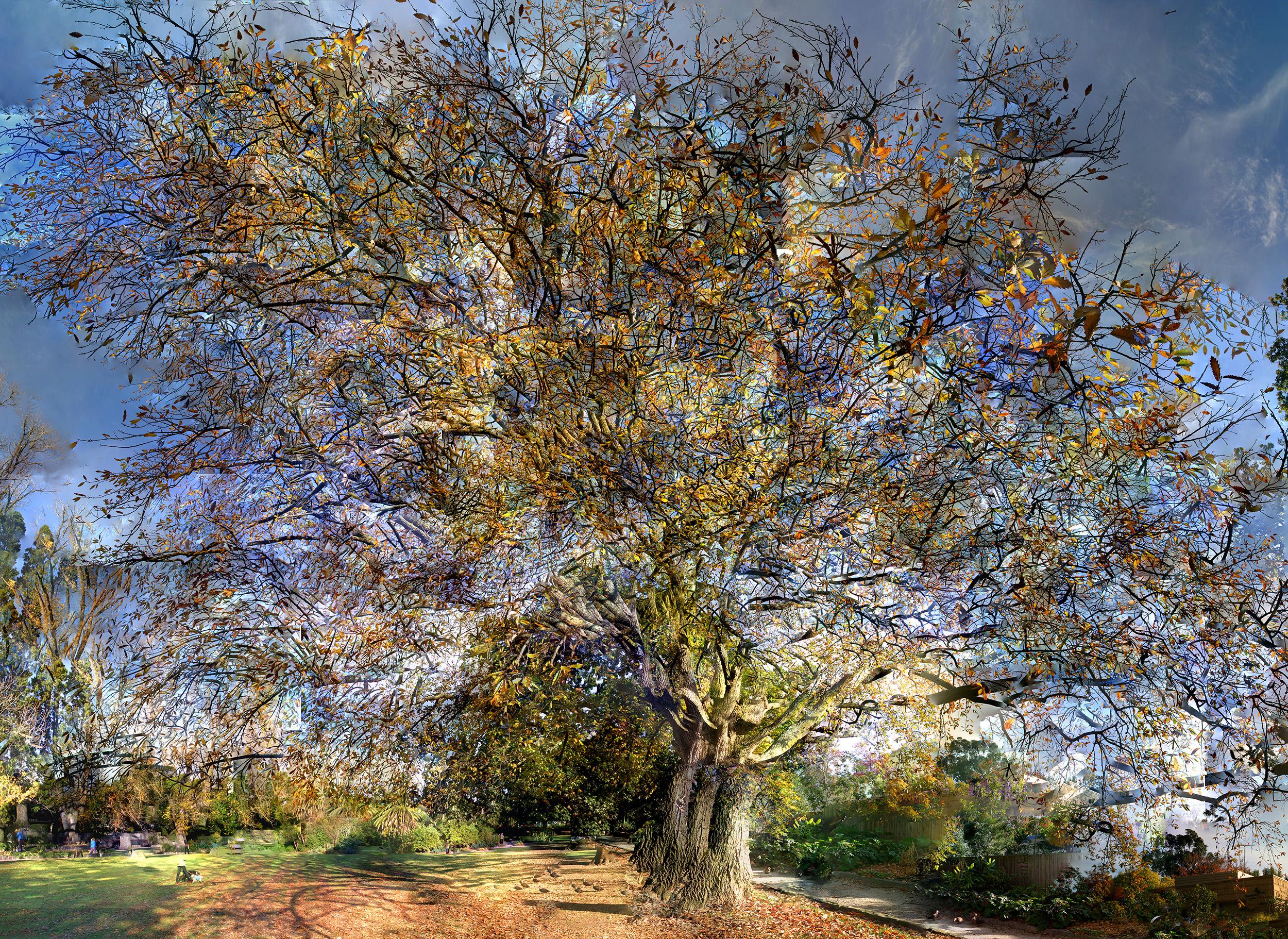Hedgeley Dene - Oak - WU41