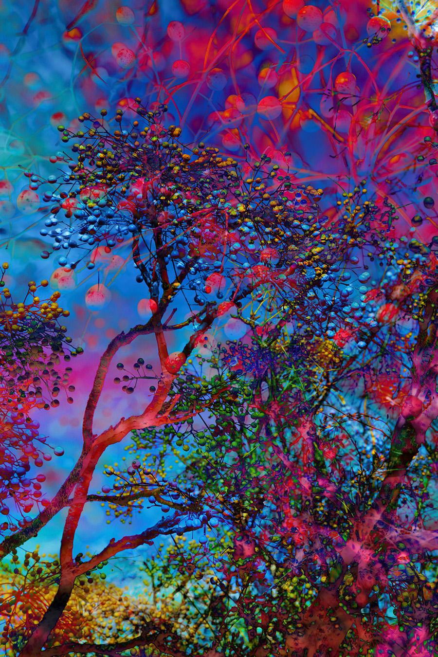 Backyard Universe - Colour