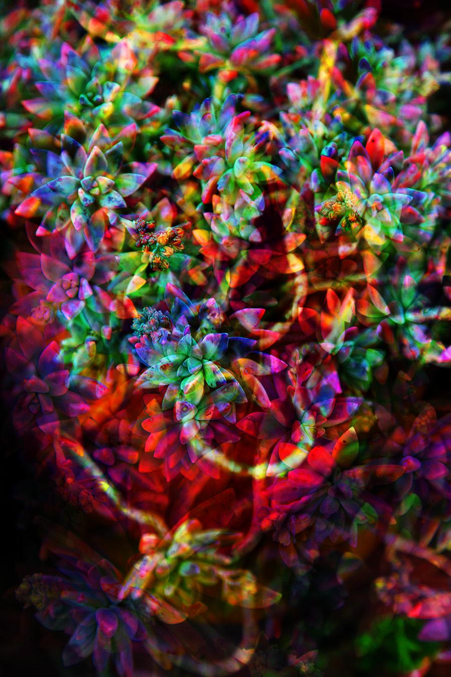 Succulent Colour 2