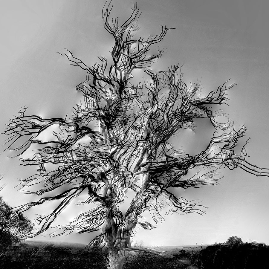 Dead Tree - Maldon
