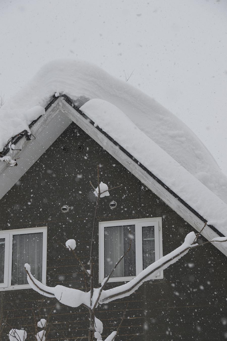 Miro in the snow