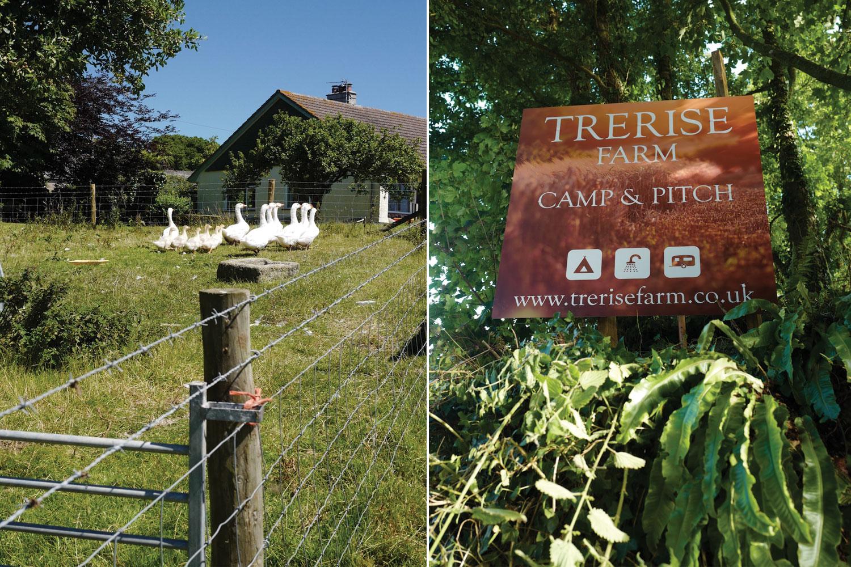 Geese-at-Trerise-Farm.jpg