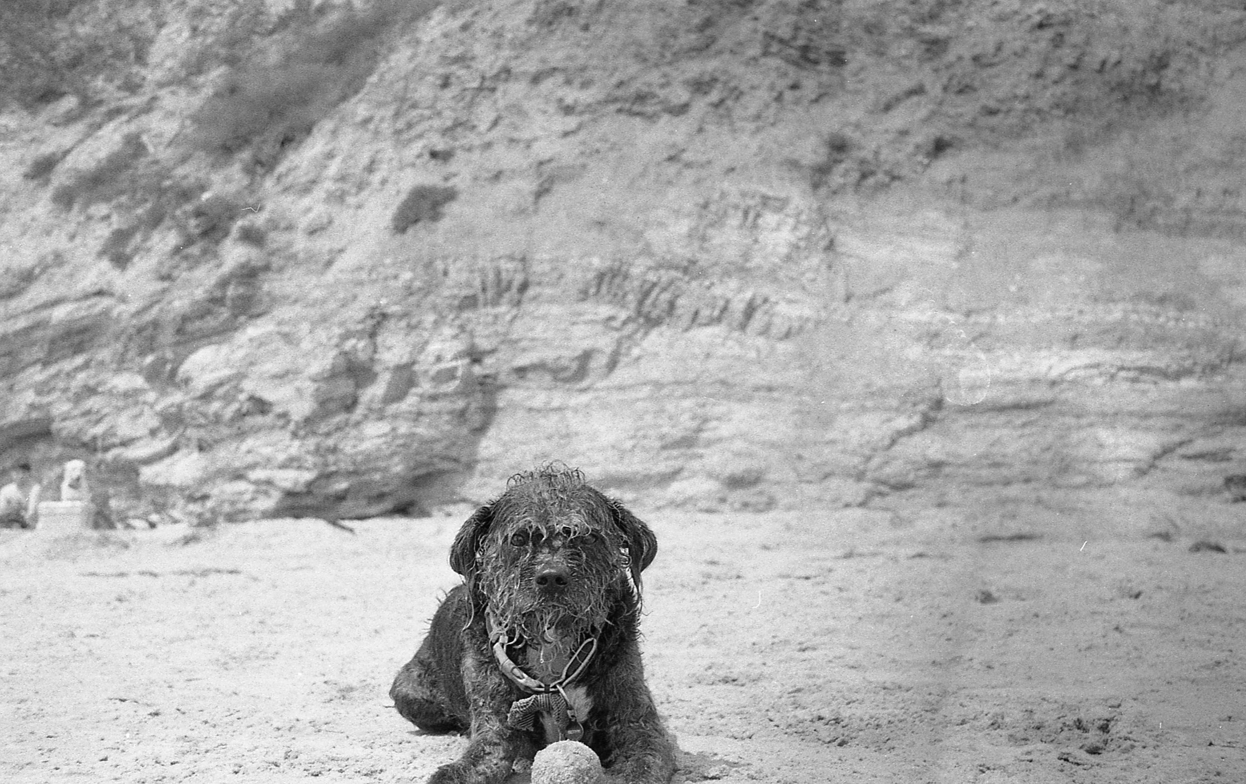 dog relaxing on the beach