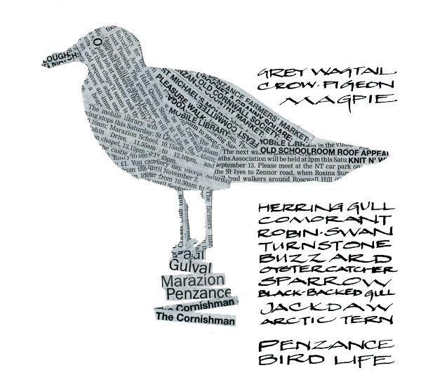 Penzance birds