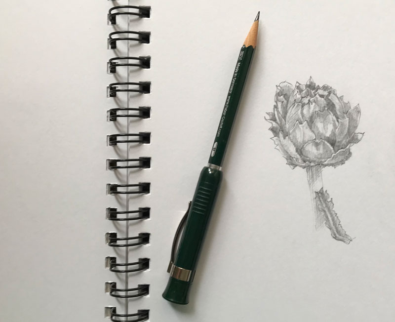 Sketching an artichoke