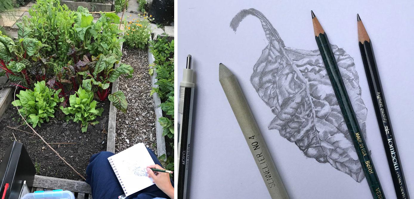 Sketching a Swiss Chard leaf