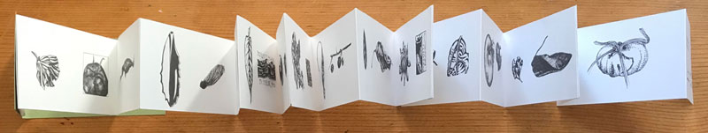 'A Month at the allotments' book's inside concertina pages