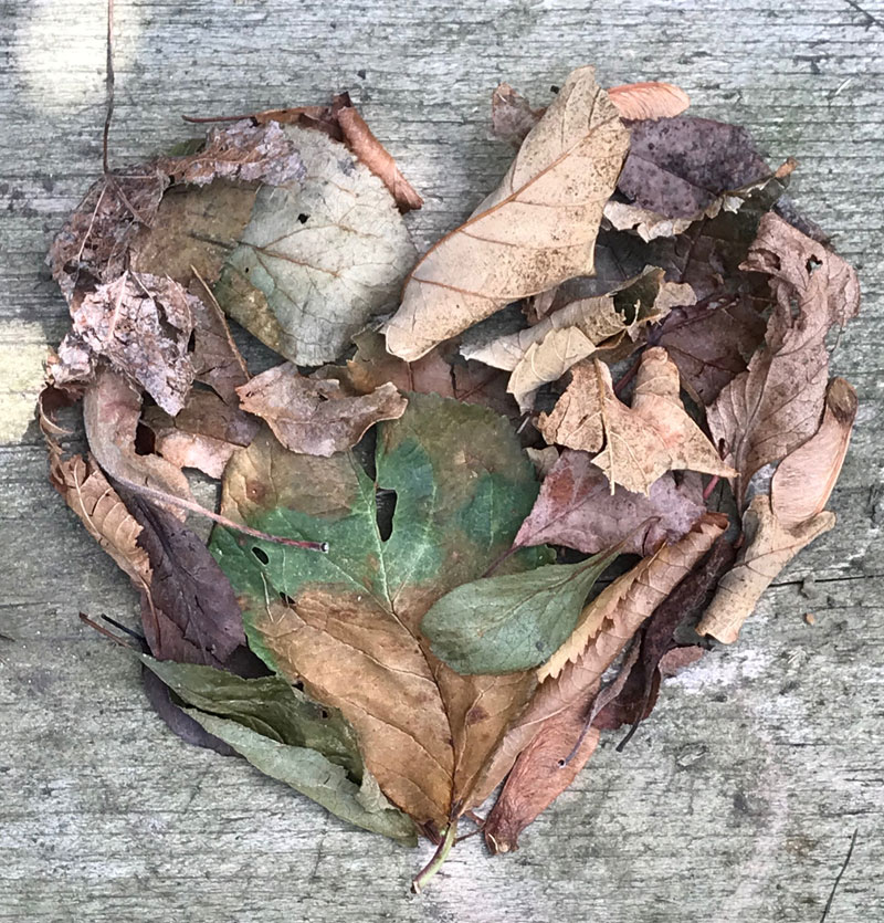 My heart of nature's discarded leaves