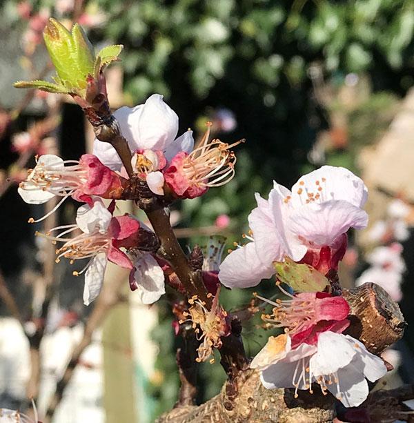 Stunning blossom