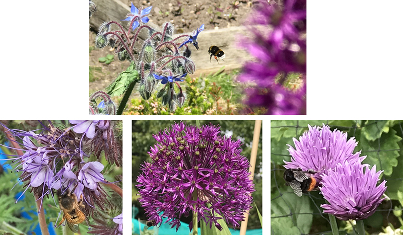 Allotment flowers and very happy bees!