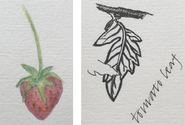 A juicy strawberry and a new tomato leaf