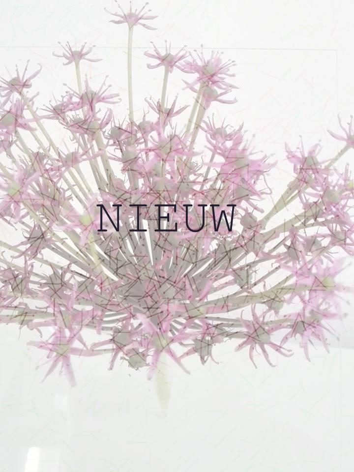 NIEUW 3.jpg