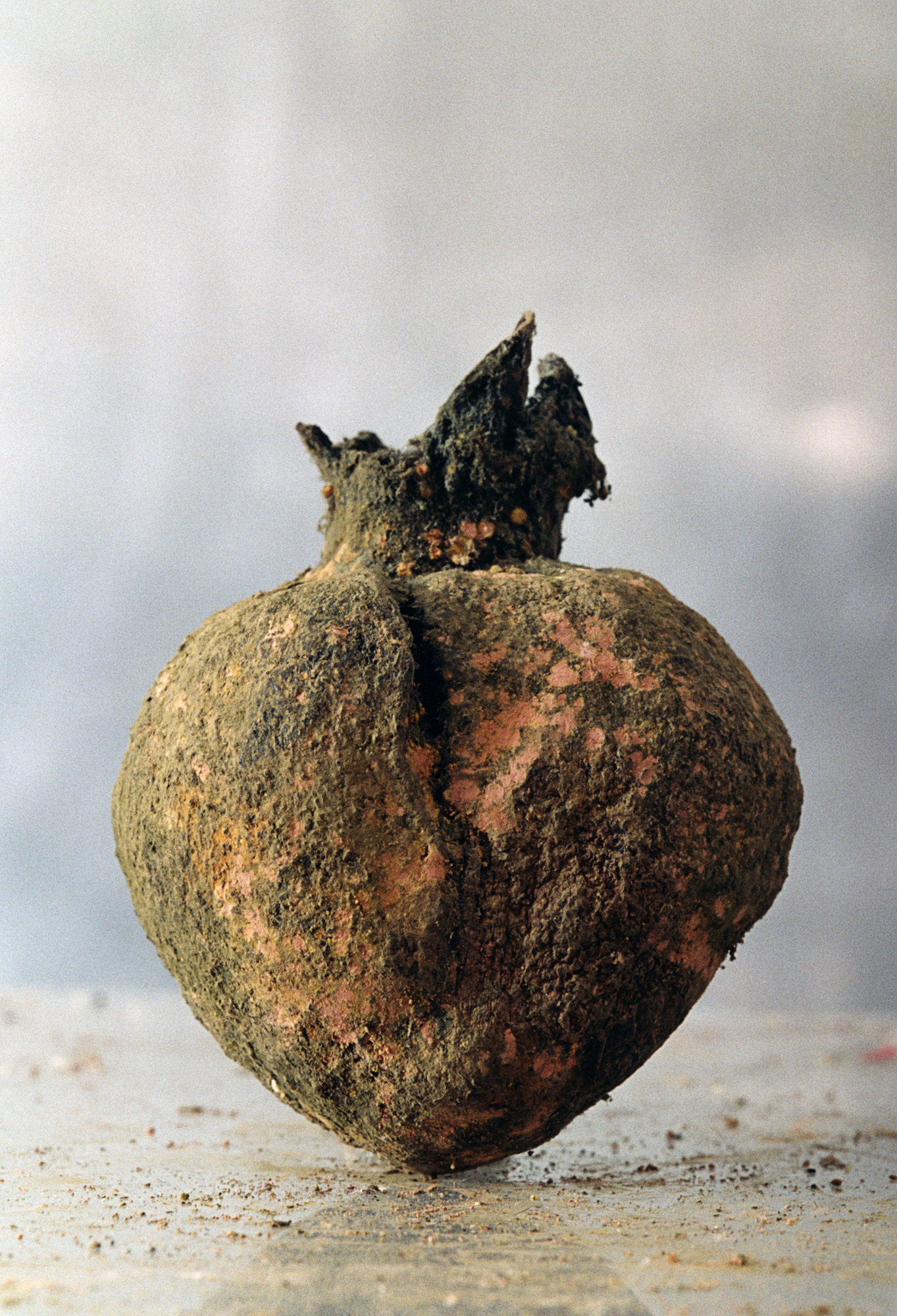 granatäpple # 2 30 cm.jpg