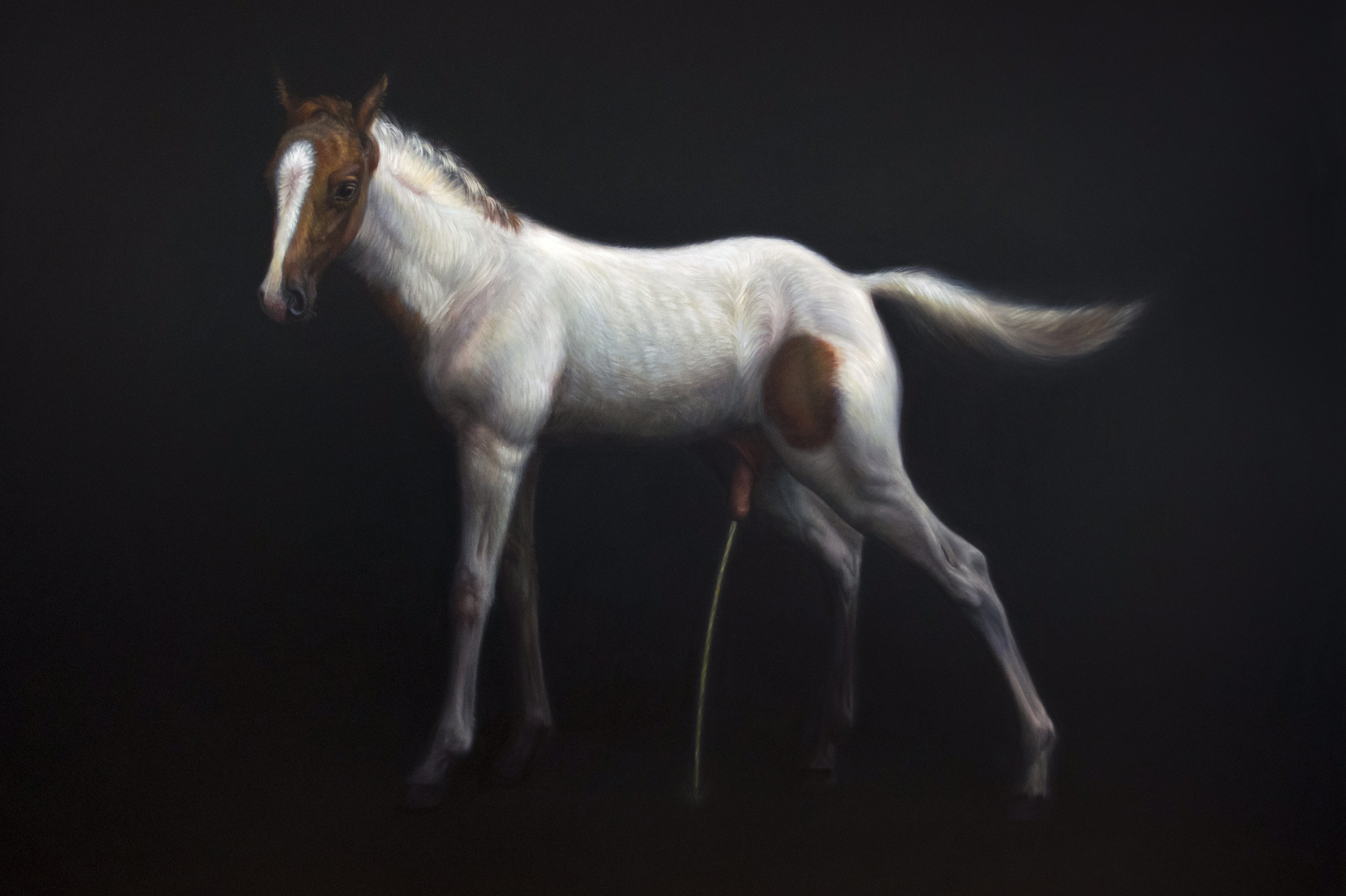 tm davy, horse (xx), 79x992.jpg