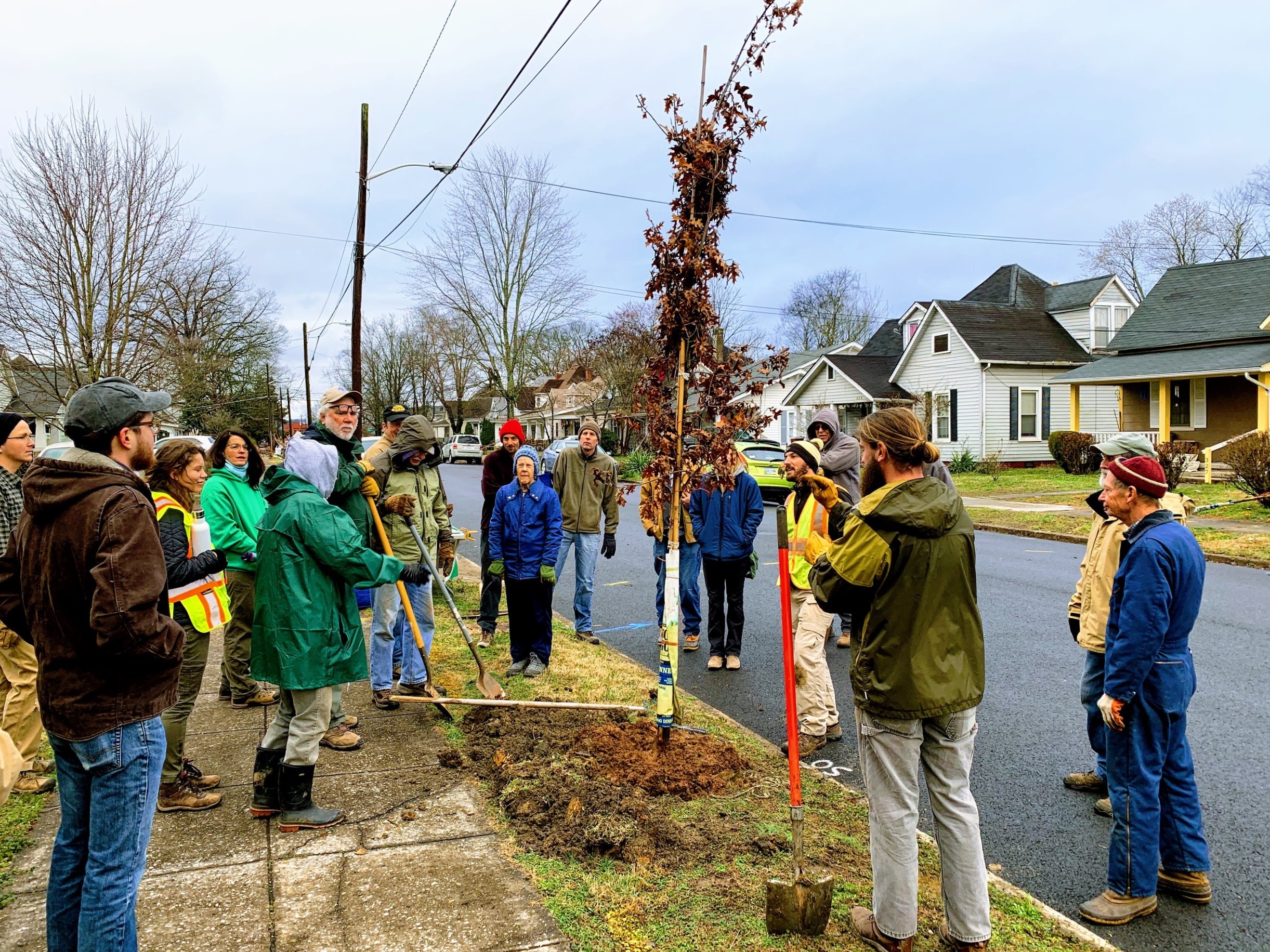 Community planting on Burwell Ave, Knoxville. A collaboration with the City of Knoxville. 30+ volunteers and 50 trees planted.