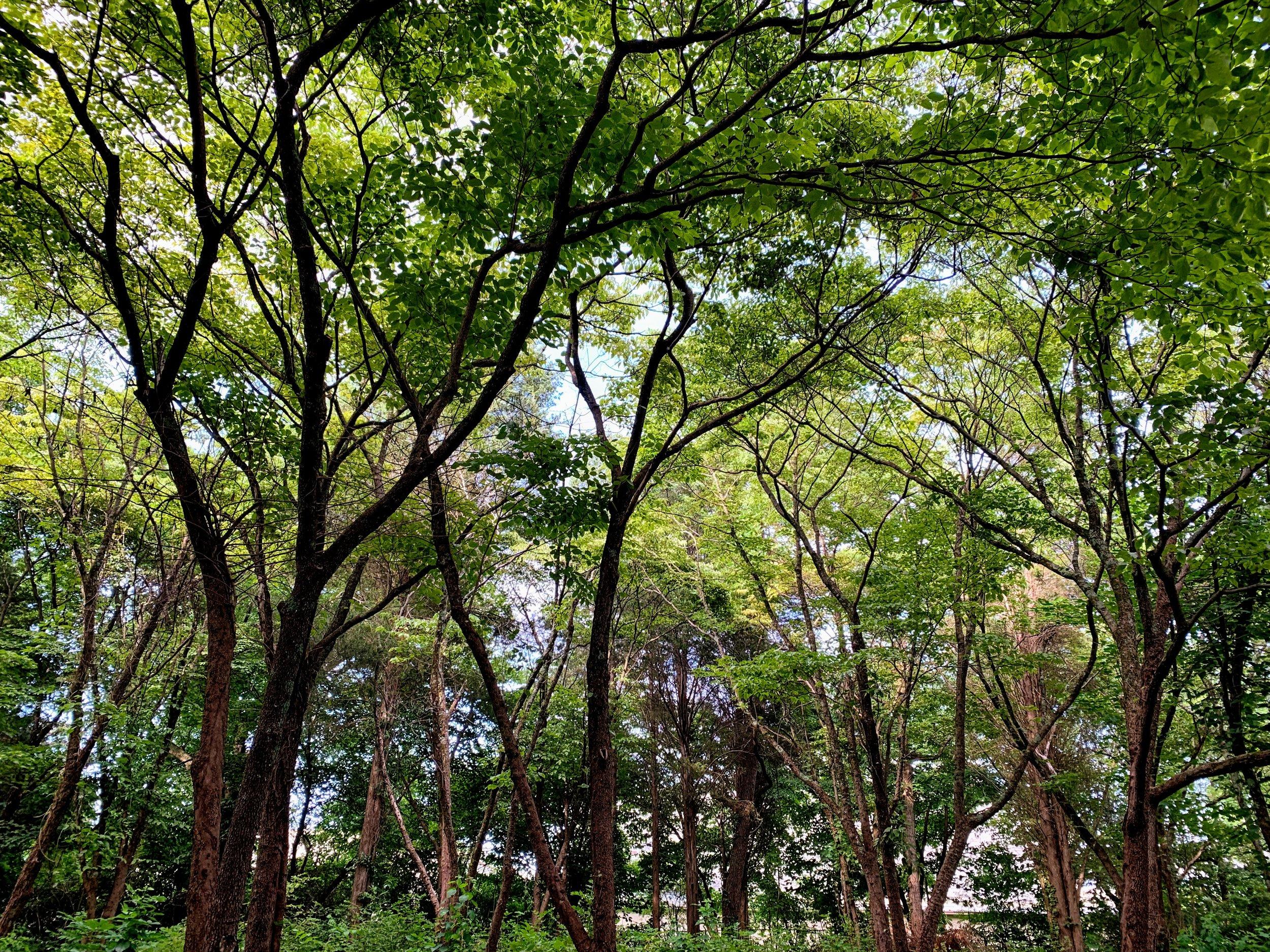 dogwoodgrove.jpg