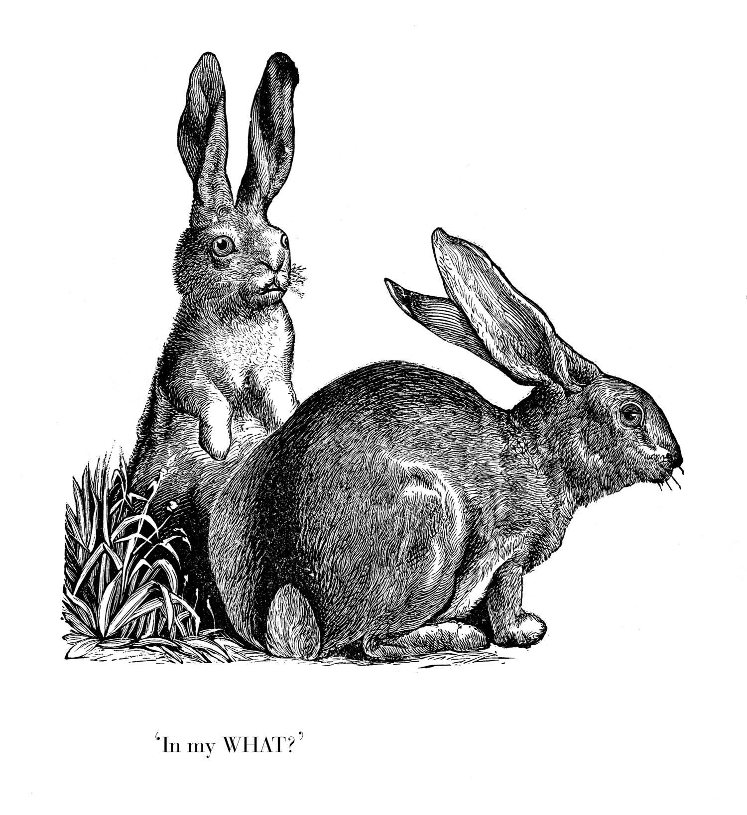 eng konijn in mijn wat .jpg