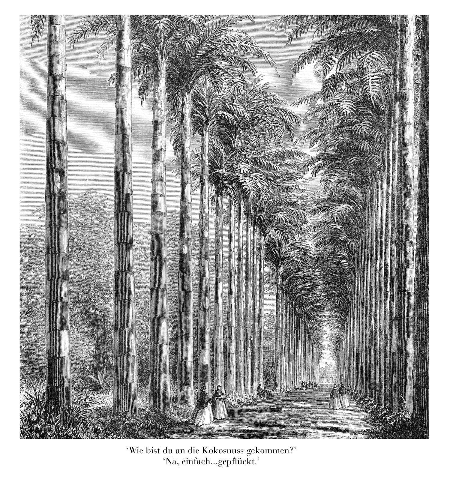 kokosnoot  kopie 2.jpg
