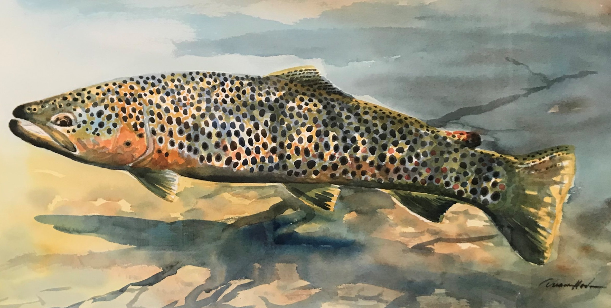 Brown Trout - Watercolor14 x 27$950.00