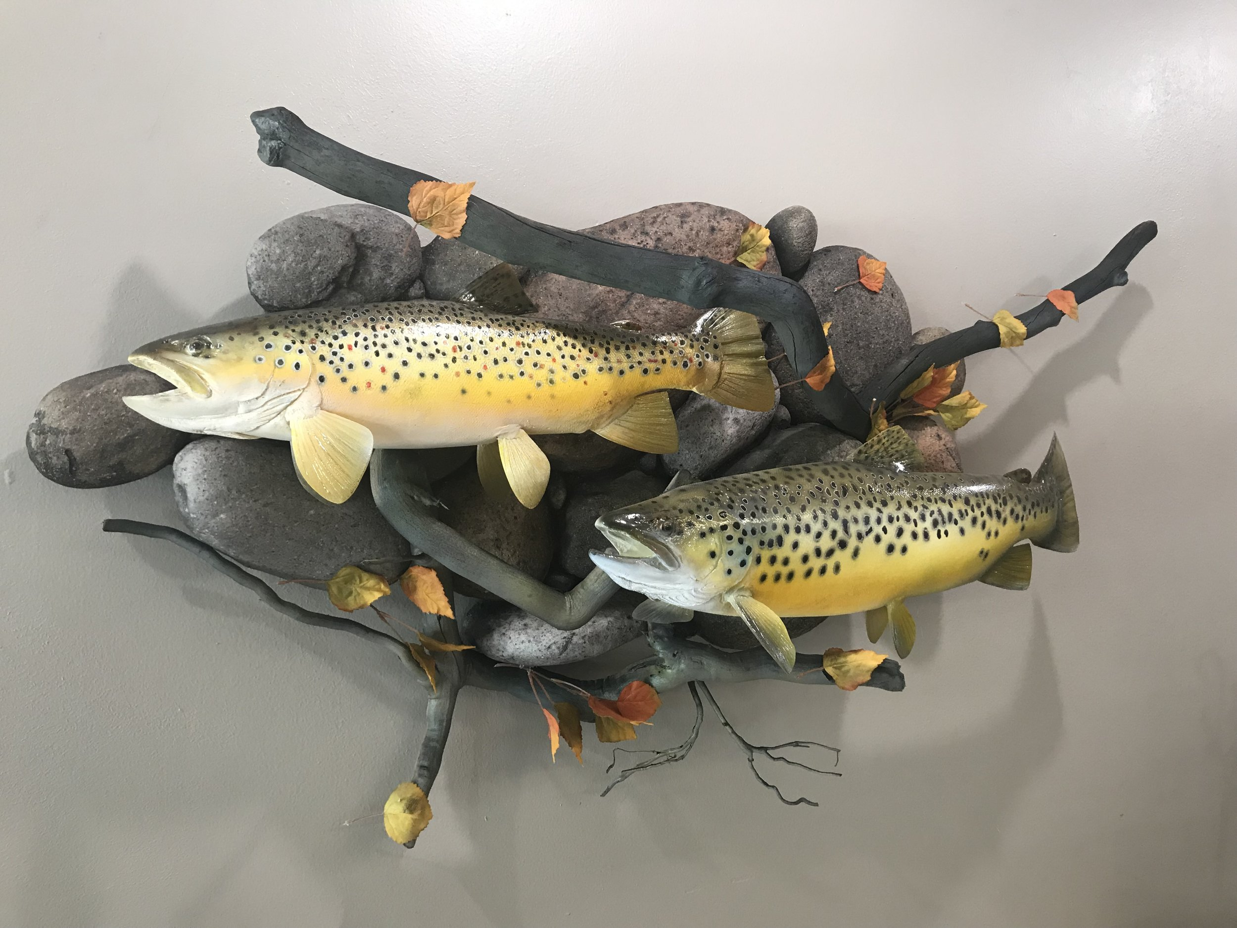 Brown Trout in the Fall -
