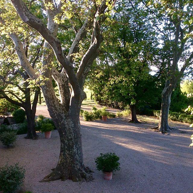 Quiet and sunny Sunday morning #enjoylife #rhonevalley #vineyard #cairanne