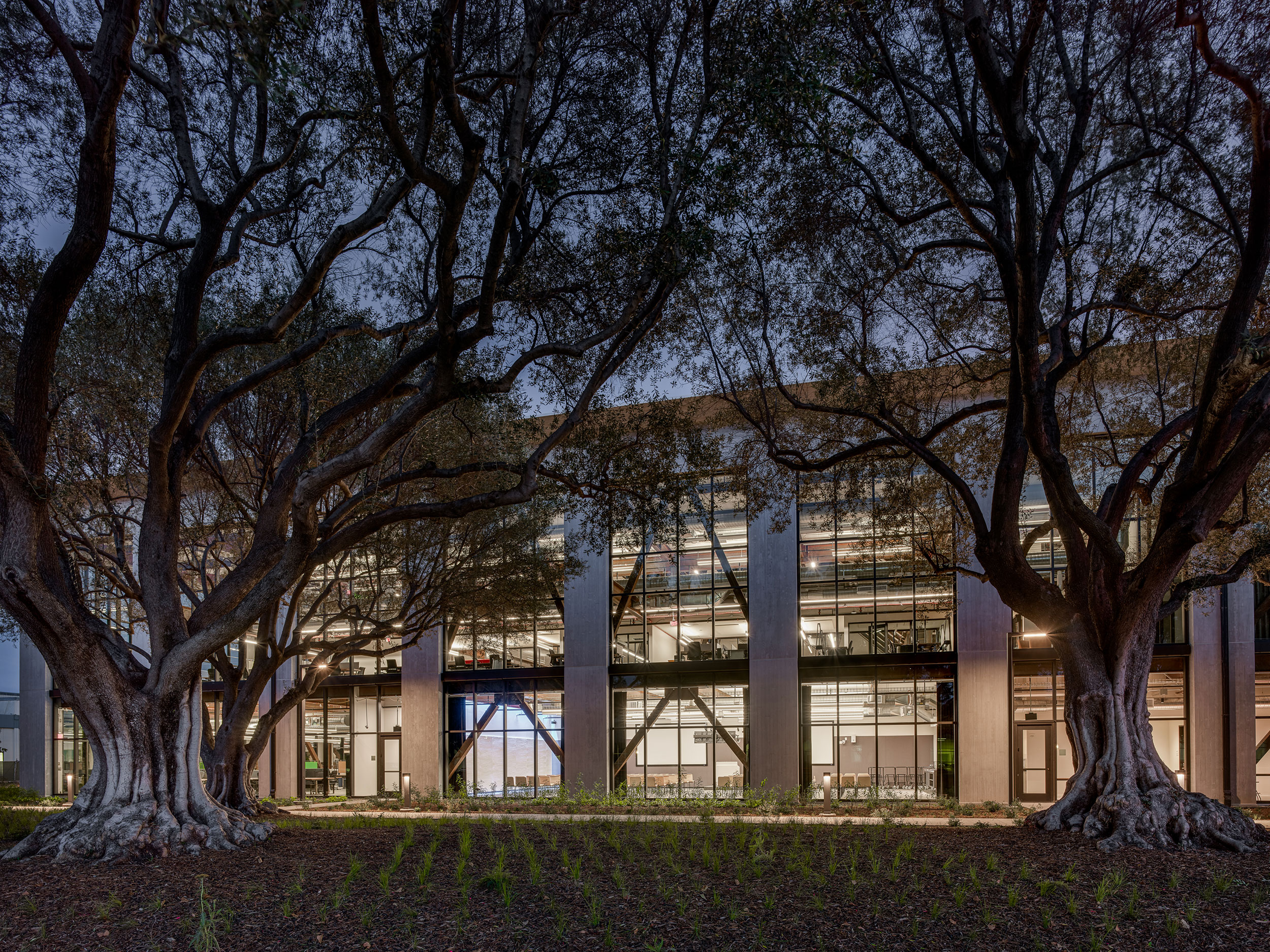 Google at 1212 Bordeaux, Trees, Lights, Night, Structure, Concrete, Nature, Biophilia