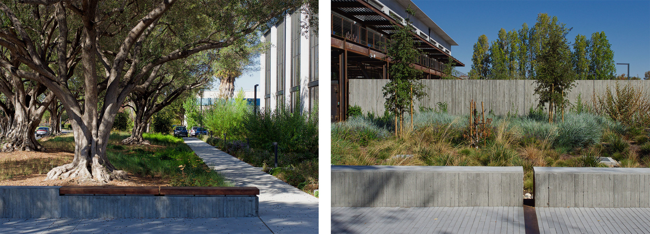 Google at 1212 Bordeaux, Bioswales, Biophilia, Olive Grove, Concrete, Corten, Habitat, Nature