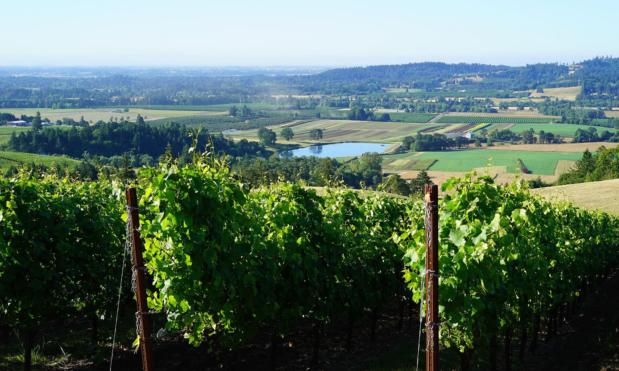 Tresori-Vineyard.jpg