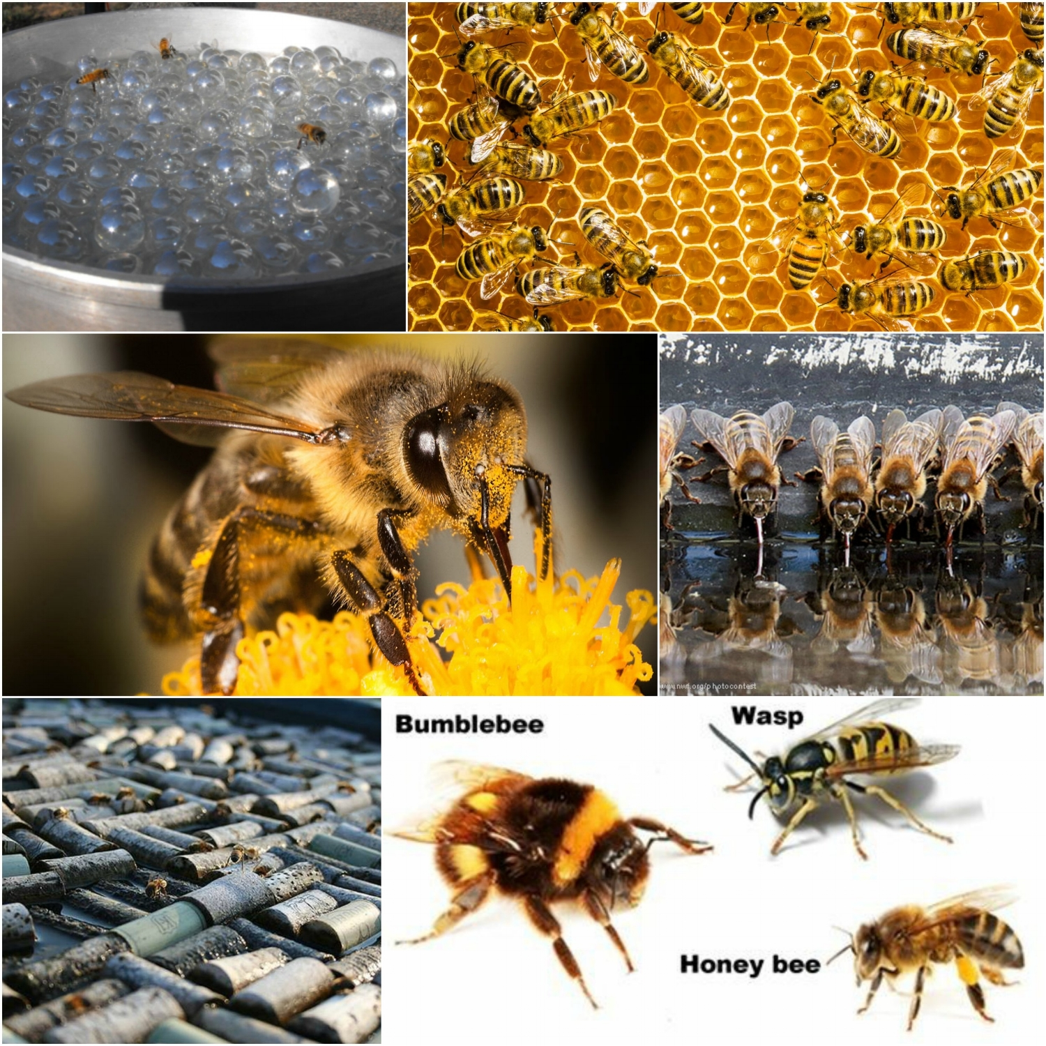 Know the difference in species. Wasps, Bumble and Honey Bees all vary in size and                                                                         demeanour.                             Learn more at:  http://www.diffen.com/difference/Bee_vs_Was   p