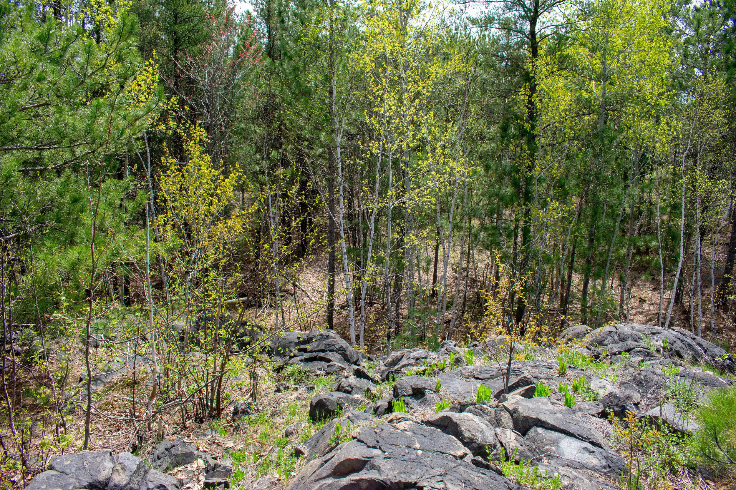 OakForest_Summer_2019_Trail_164.jpg