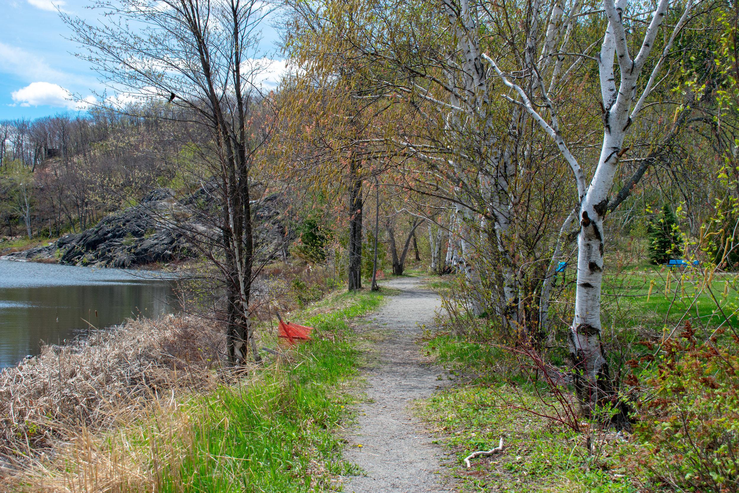 OakForest_Summer_2019_Trail_014.jpg