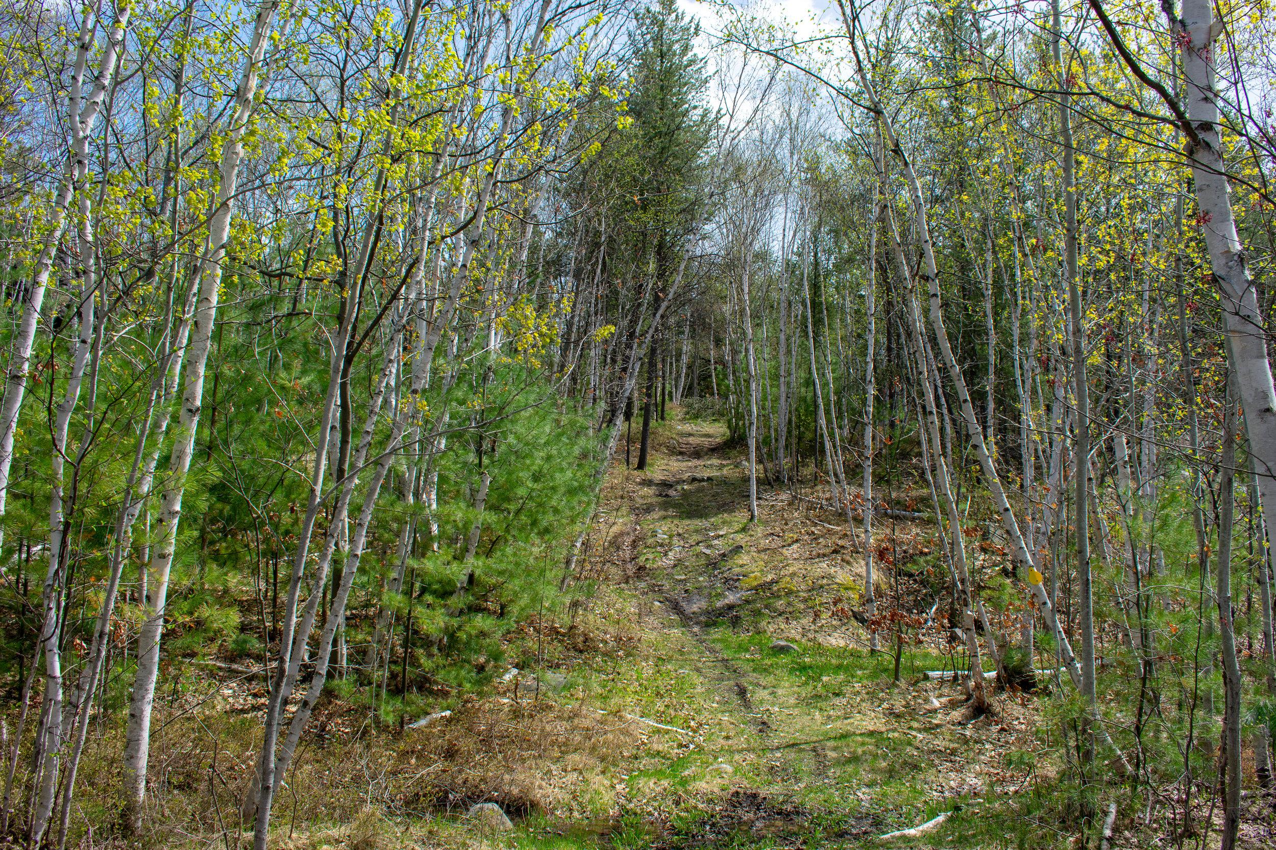 OakForest_Summer_2019_Trail_175.jpg