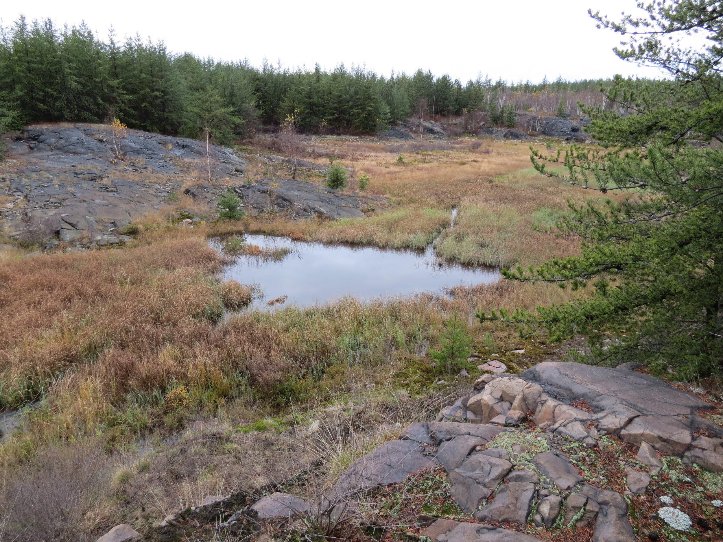 _Sudbury Landscape - Fall (1).jpg