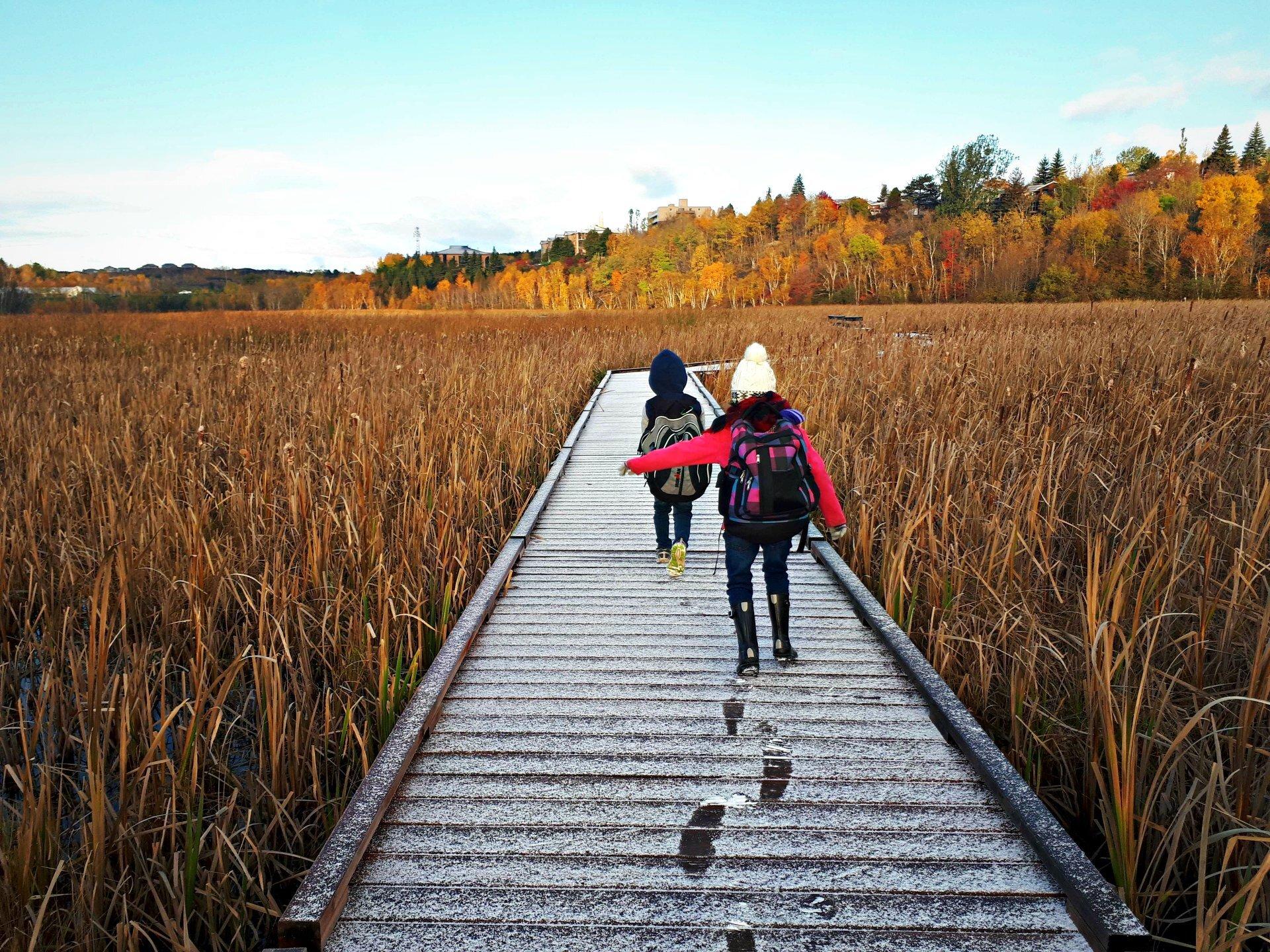 Lily Creek Boardwalk