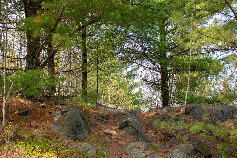 Oak Forest Trail