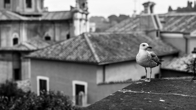 Rome_9
