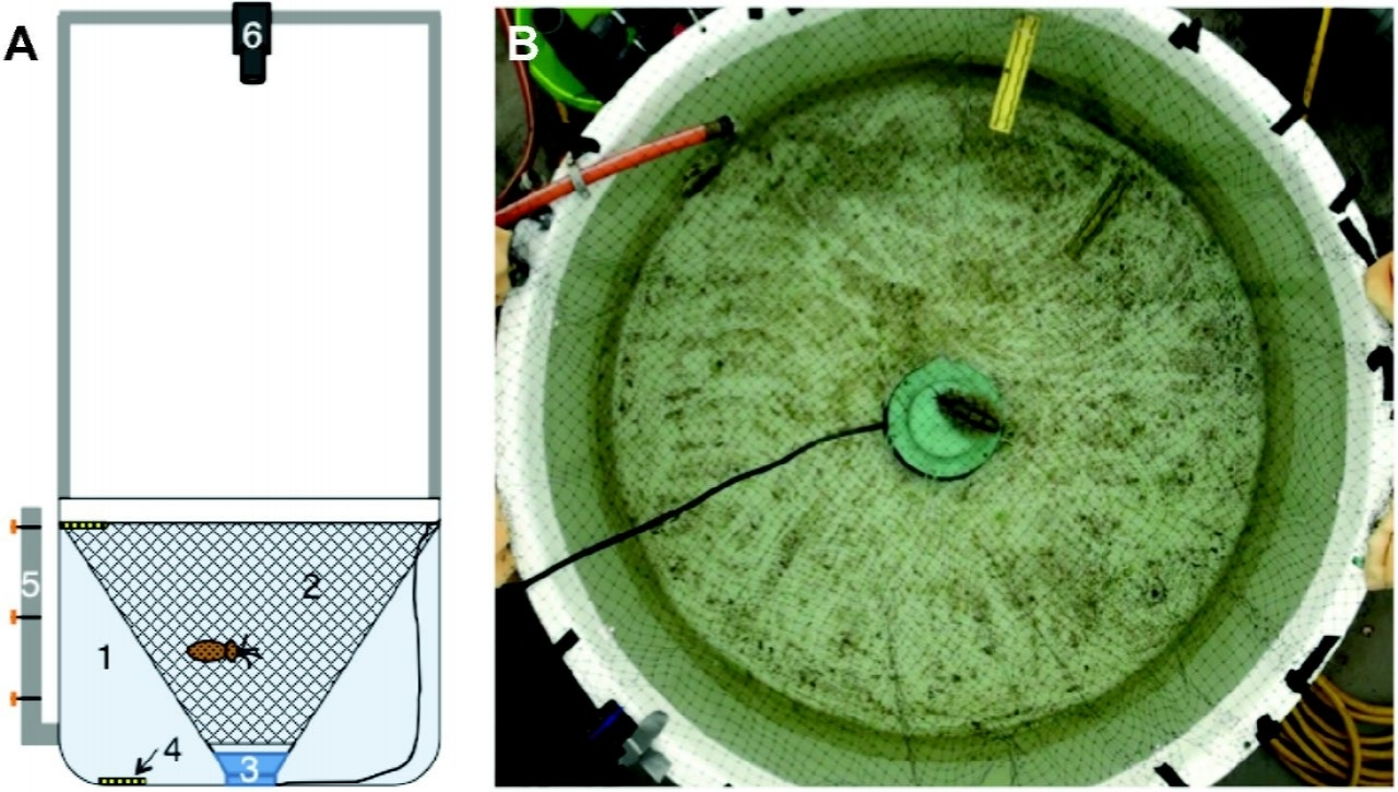 Figure 7 from Samson et al., 2014: the experimental set-up. A: Schematic side view with tank (1), net (2), speaker (3), calibration ruler (4), outflow pipe (5), and HD camera (6). B: video frame as recorded by the HD camera.