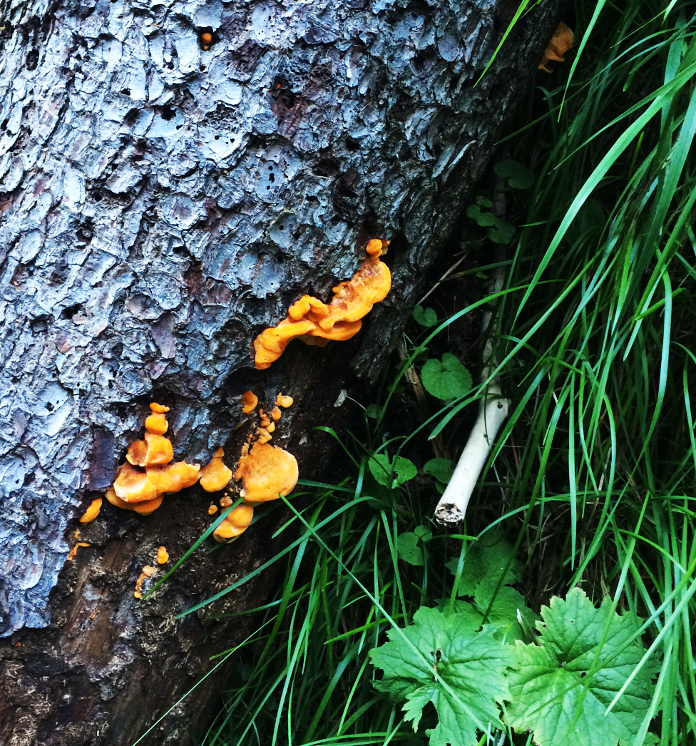 slovak paradise fungus