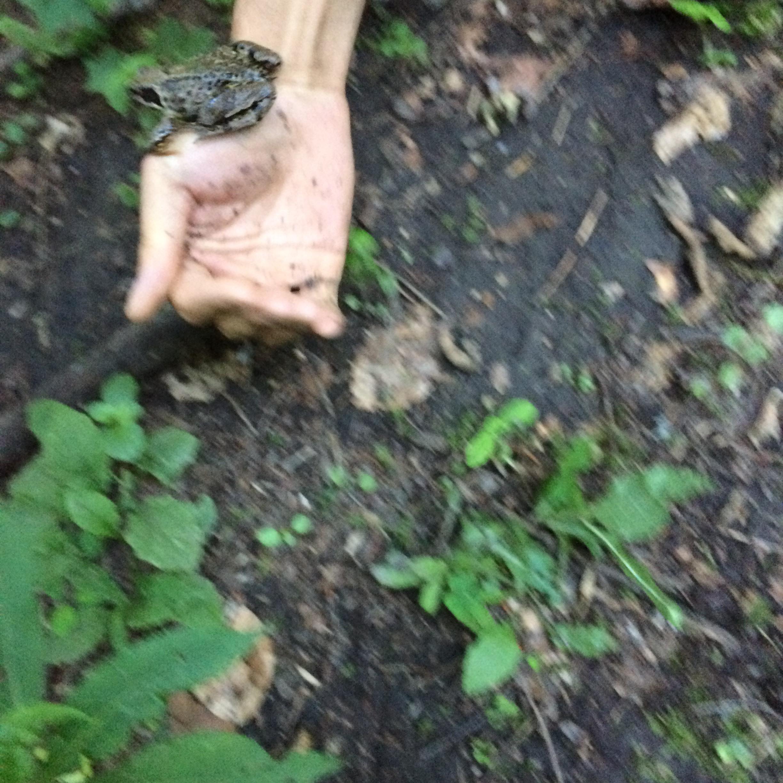 slovak paradise frog