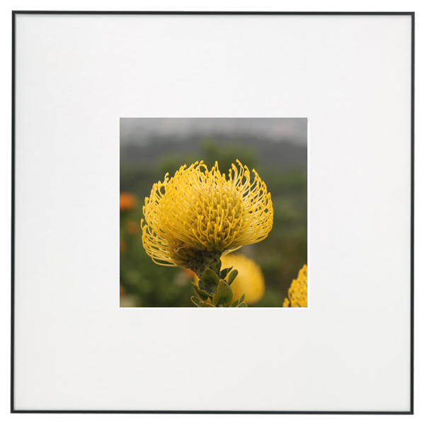 Flower in Gallery Frame.jpg
