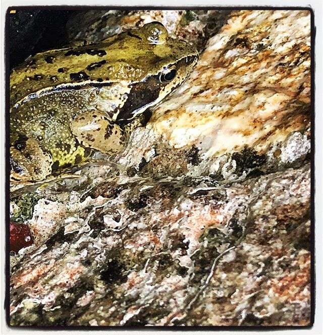 local resident wearing camouflage #toad #locals #camoflage