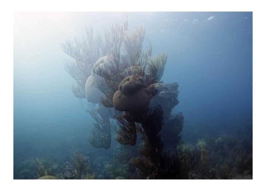 Reef #7