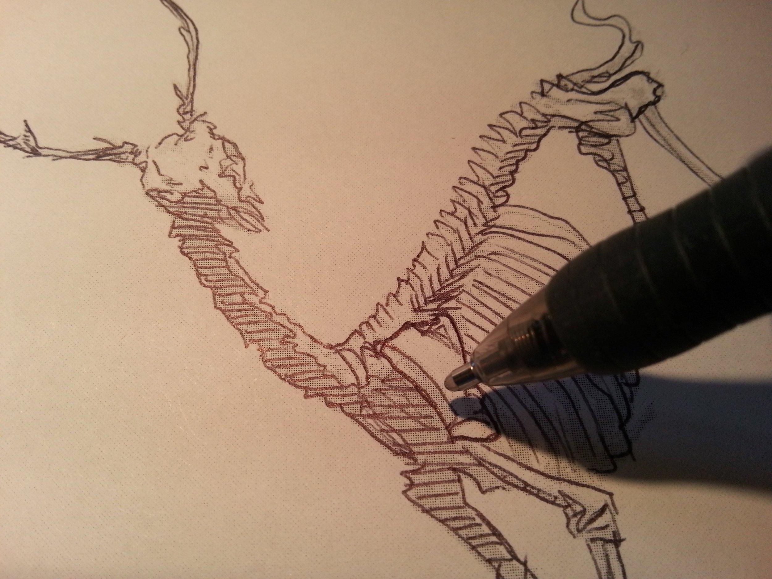 deer_illo_sketch1.jpg
