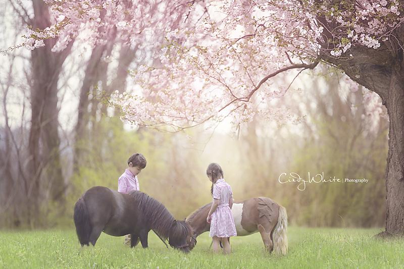 cherry_blossom_horses copy.jpg