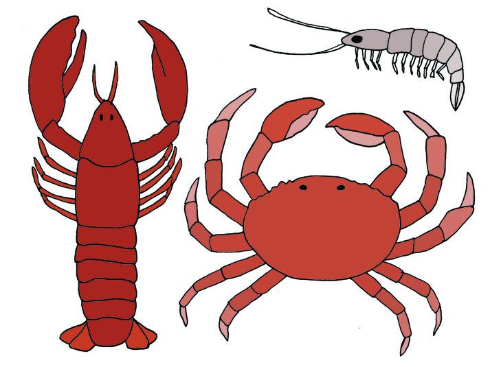 crab_lobster.jpg