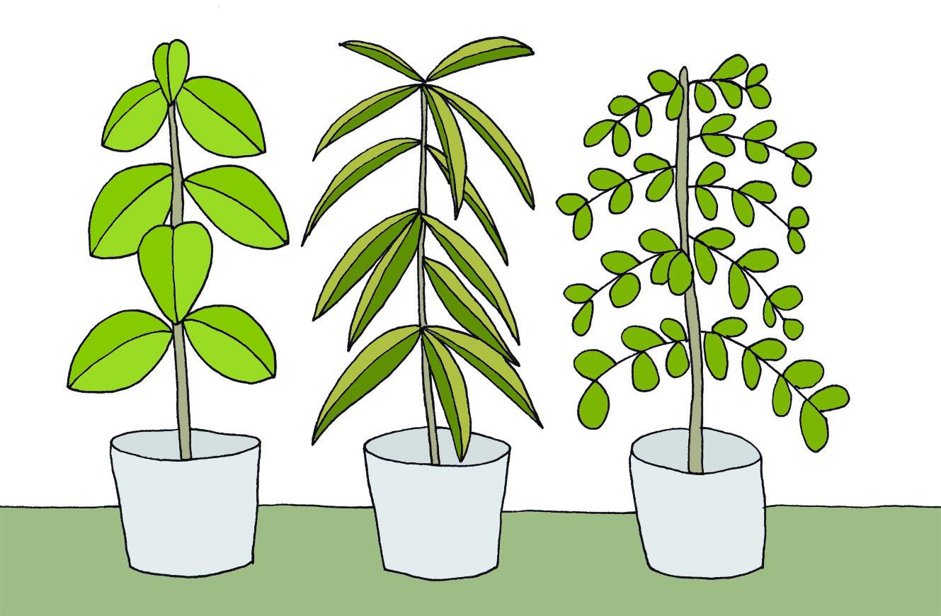 house_plants.jpg