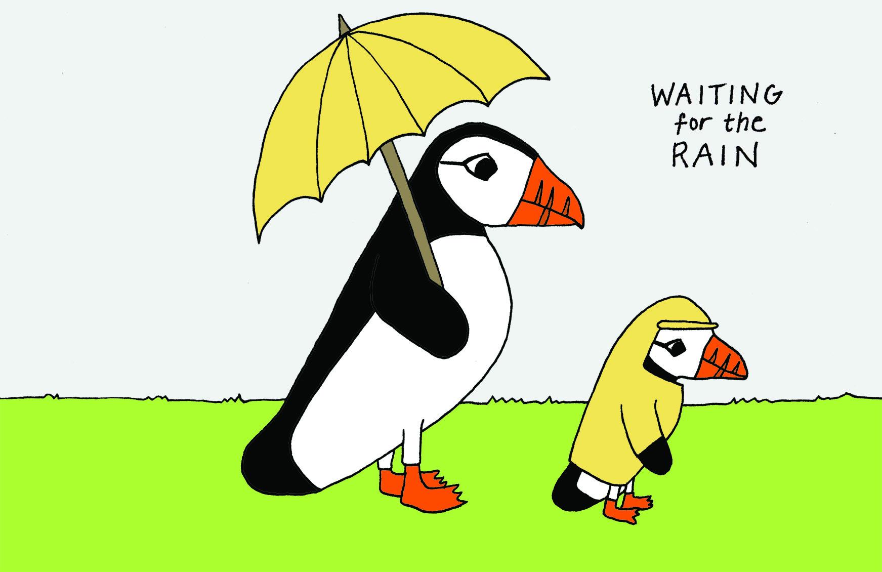 puffins_prepared_for_rain.jpg